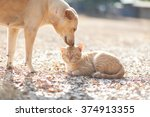Stock photo dog and cat playing together outdoor 374913355