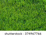 fresh green grass texture in... | Shutterstock . vector #374967766