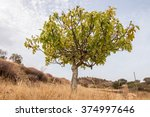 View Of A Dry Landscape With A...