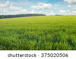 spring meadow and blue sky | Shutterstock . vector #375020506