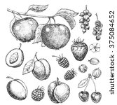 vector hand drawn food. fruits... | Shutterstock .eps vector #375084652
