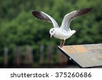Seagulls Standing On Label At...