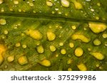 water droplets on leaves | Shutterstock . vector #375299986