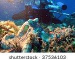 a underwater cameraman and an... | Shutterstock . vector #37536103