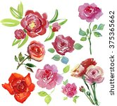 watercolor set of hand drawn...   Shutterstock . vector #375365662