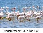 flamingos at the walvish bay in ... | Shutterstock . vector #375405352