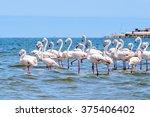 walvish bay  namibia. pink... | Shutterstock . vector #375406402