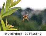 Garden Spider In The Cobweb