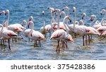 flamingos at the walvish bay in ... | Shutterstock . vector #375428386