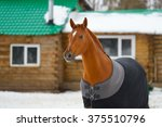 The Horse In The Blanket
