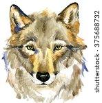 Wolf. Forest Animal Wolf....