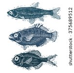 set of vector fishes  different ... | Shutterstock .eps vector #375689512