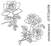 hand drawn roses flowers vector ... | Shutterstock .eps vector #375726958