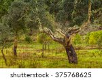 Cork Trees Natural Resources ...