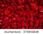 Stock photo red natural roses background 375846838