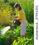 young girl watering vegetable...   Shutterstock . vector #37591351