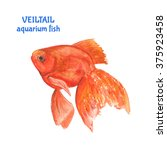 watercolor goldfish or veil... | Shutterstock . vector #375923458
