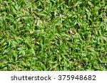 green grass   Shutterstock . vector #375948682