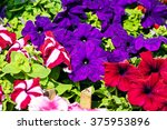 Detail Of Colorful Flowers At...