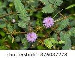Beautiful Violet Purple Flower...