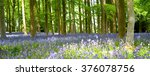 A Bluebell Wood In Bloom In...