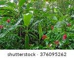 wet plants in tropical rain... | Shutterstock . vector #376095262