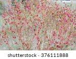 roselle flowers red roselle... | Shutterstock . vector #376111888