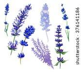vintage set of lavender flowers ... | Shutterstock . vector #376141186