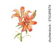 Beautiful Orange Lily....