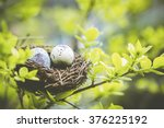 Bird nest on branch with easter ...