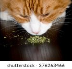 Closeup Of A Cat Sniffing A...
