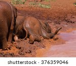A Baby Elephant Falling And...