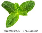 mint isolated on the white... | Shutterstock . vector #376363882