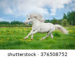 White Shetland Pony With...