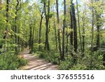 path in the woods | Shutterstock . vector #376555516