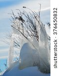 Small photo of Frozen Entrapment - Bushes Encased in Ice - Rainy Lake, Minnesota