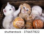 Stock photo kittens scottish fold sleeping with a ball of wool 376657822