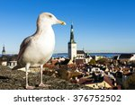 A Sea Gull Is Enjoying The Vie...