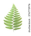 green fern leaf isolated on... | Shutterstock .eps vector #376773976