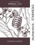 vintage design with herbal tea... | Shutterstock .eps vector #376848262