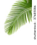 leaves of palm tree with... | Shutterstock . vector #37685086
