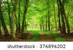 walkaway in the spring forest... | Shutterstock . vector #376896202