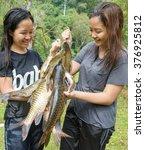 "Small photo of Kiulu Sabah Malaysia - Feb 12, 2016:Ladies looking at freshwater fish known as ""Kelah"" during fish harvesting season at Pahu Kiulu. Freshwater Malaysian Mahseer is abundance in rocky river in Kiulu."
