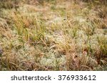 grass and moss for backgrounds... | Shutterstock . vector #376933612