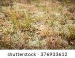 grass and moss for backgrounds... | Shutterstock . vector #376933612