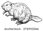 Beaver   Hand Drawn Vector...