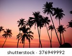 silhouetted of coconut tree... | Shutterstock . vector #376949992