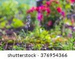 natural herbal background. ... | Shutterstock . vector #376954366