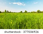 Green Field With Flowers Under...