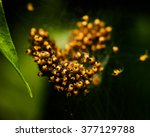 A nest of spiderlings on a leaf